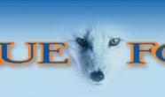 blue_fox_hdr_lrg