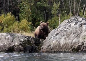 33-Skilak Bear 2013_22